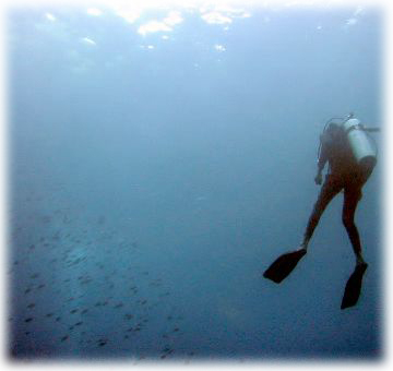 photo of diver descending